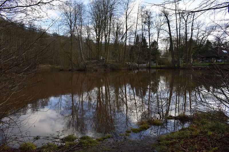 der Schlossteich in Aumühle Herbst Pond Reflection Schloßteich Stausee Bridge Day Nature No People Outdoors Reflections Sunshine Teich Tree Water