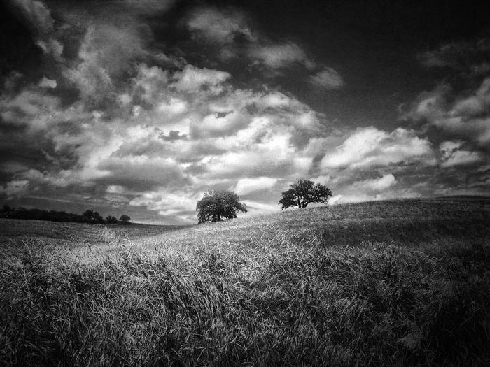 NEM Black&white NEM Memories IPhoneography NEM Clouds NEM Painterly