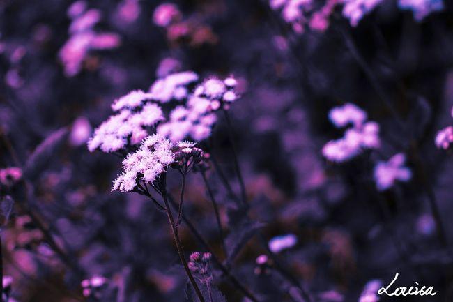 摄影 花卉 佳能 风光 Large Aperture Canon Mood Photography