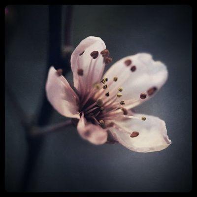 good morning Flowers Flower Details Lobostudio Lobo_flowers