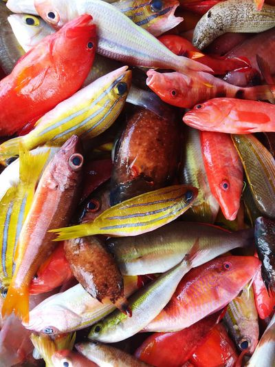 Colourful Fishes Full Frame Backgrounds Food And Drink Food Freshness No People Animal Wellbeing Fish Healthy Eating Close-up Vertebrate High Angle View Abundance Raw Food Seafood Animal Wildlife Day Water Animals In The Wild