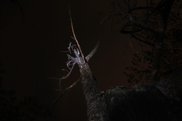 Highlighted tree in the night sky. Beauty In Nature Black Background Branch Camping Close-up Dark Darkness And Light Environment Flashlight Fragility Low Angle View Nature Night Night Sky Nightphotography Nightshot No People Outdoors Stars Tree