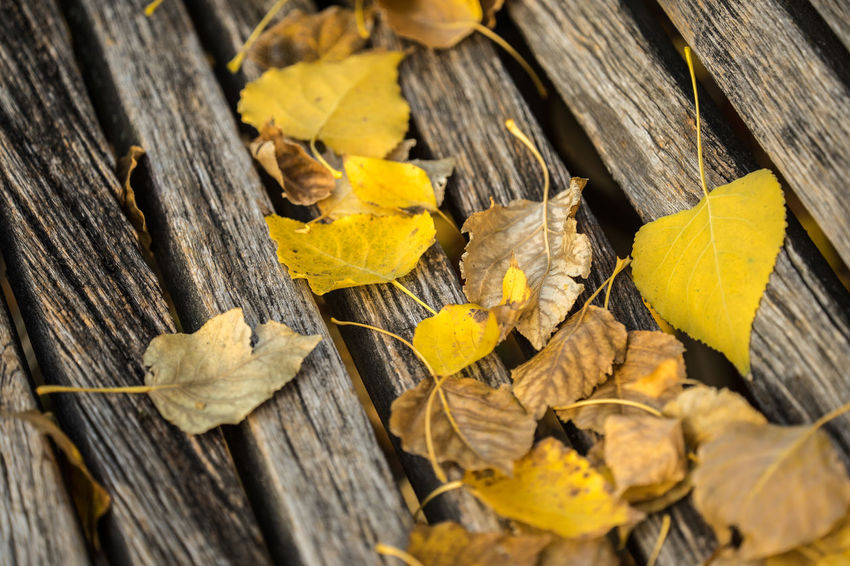 Morning walk in autumn in Berlin, Germany Autumn Leaves Day Morning Sunrise Wood - Material Leaf Yellow Nature Plant Part Close-up No People Change Tree Dry Outdoors Wood Textured  High Angle View Selective Focus Plank Falling