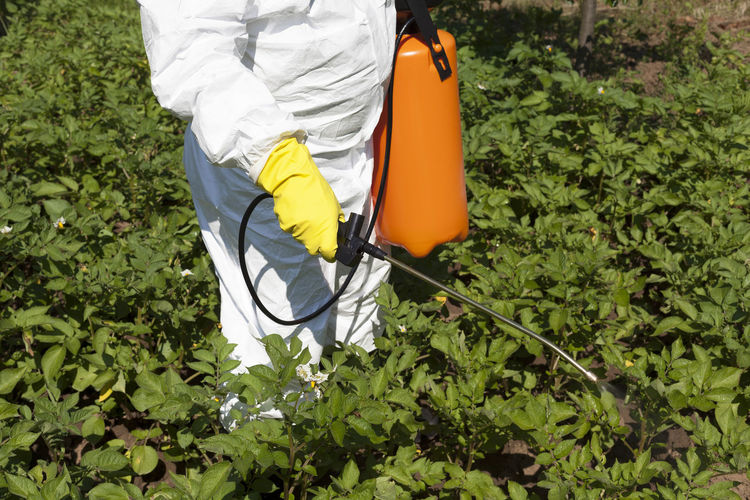 Farmer spraying toxic pesticides or insecticides in fruit orchard. Adult Agriculture Backpack Day Farmer Field Grass Green Color Growth Leaf Lifestyles Low Section Men Nature Occupation One Man Only One Person Outdoors Pesticide Plant Protective Sprayer Suitup Vegetables
