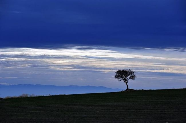 Alone Nature_collection Hills Tree