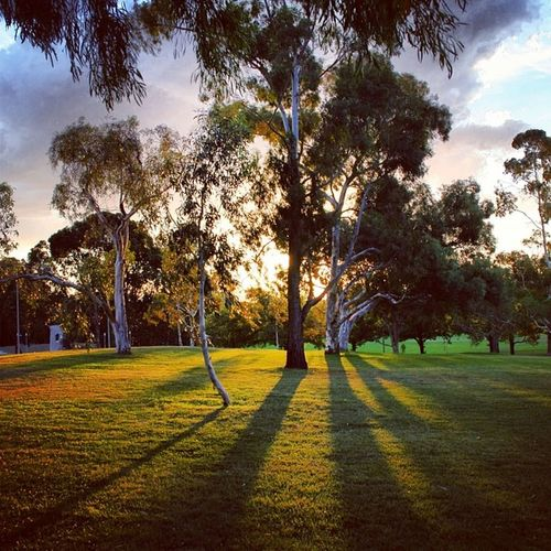 Gum trees, lush green lawns and summer sunset