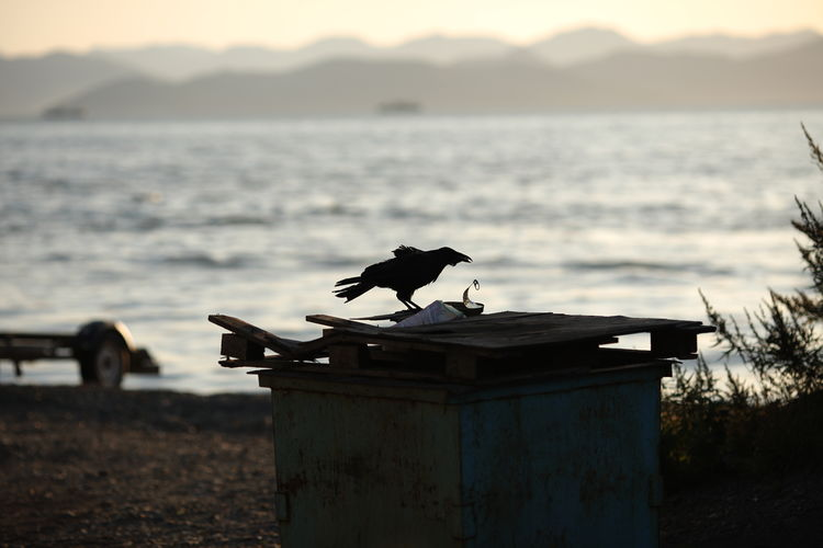 Silhouette bird perching on a shore