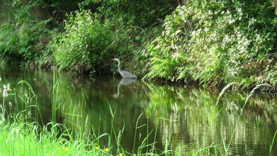 Water Nature Lake Grass Reflection Growth Outdoors Tree Green Color Day Beauty In Nature Animals In The Wild No People Plant Animal Themes Tranquility Scenics Bird Heron On The Canal