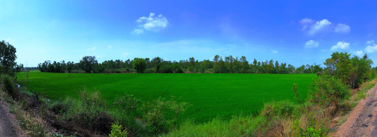 Tree Field Landscape Tranquil Scene Growth Nature Beauty In Nature Tranquility Green Color Agriculture Grass Scenics Sky Outdoors No People Plant Blue
