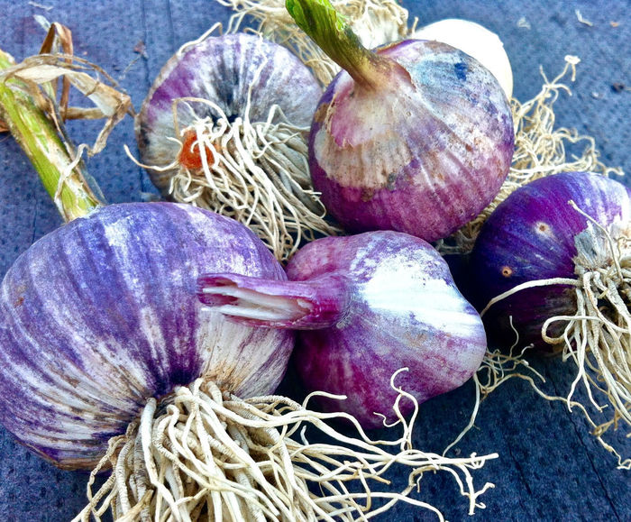 Close-up Day Food Food And Drink Food Photography Fresh Garlic Freshness Garlic Group Of Objects Harvesting Season Healthy Eating No People Organic Food Organic Gardening Organic Living Organic Vegetables Outdoors Presentation Background Purple Purple Colors Raw Food Vegetable