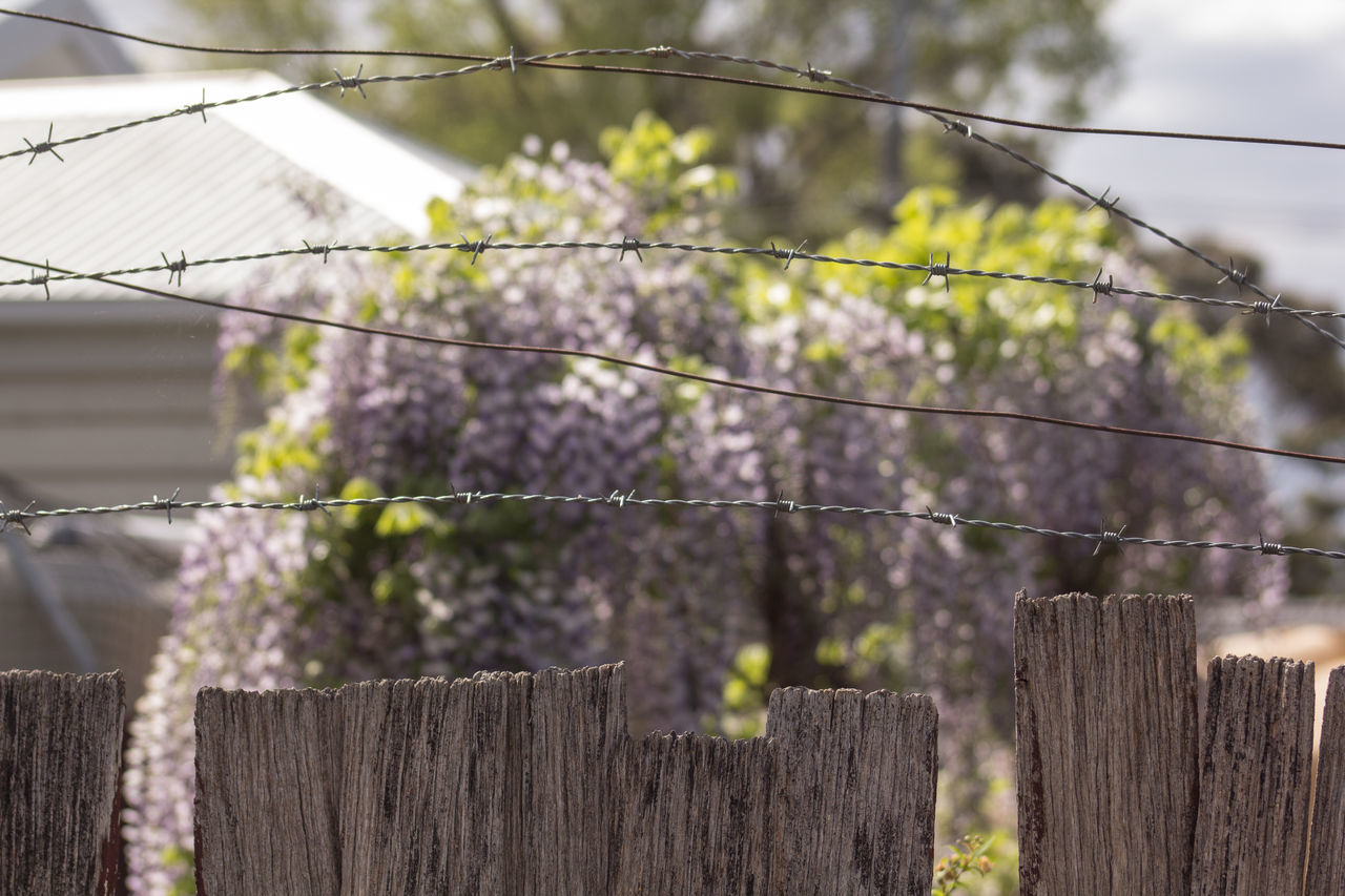 fence, boundary, barrier, protection, safety, security, wood - material, focus on foreground, no people, day, wire, nature, barbed wire, plant, outdoors, close-up, tree, post, metal, sky, wooden post