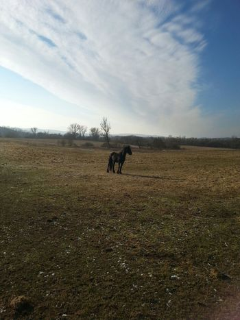 Taking Photos Showcase: December Horse Countryside Cloudy Sky Early Morning Early Winter Lonely Majestic