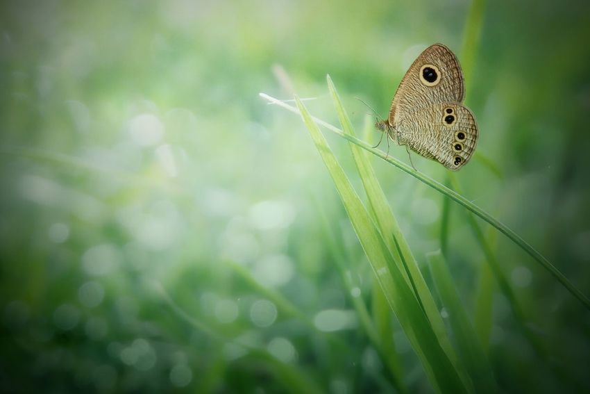 One Animal Nature Animal Wildlife Animals In The Wild Insect Close-up Animal Themes Day Green Color No People Plant Outdoors Beauty In Nature Fragility