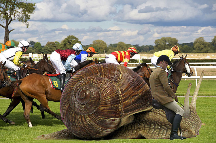 Blue Sky White Clouds Photo Montage Snail Rider Competition Day Domestic Animals Field Grass Horse Horse Race Mammal Men Occupation Outdoors People Real People Sky Snails Pace Tree Will He Win? Mobility In Mega Cities