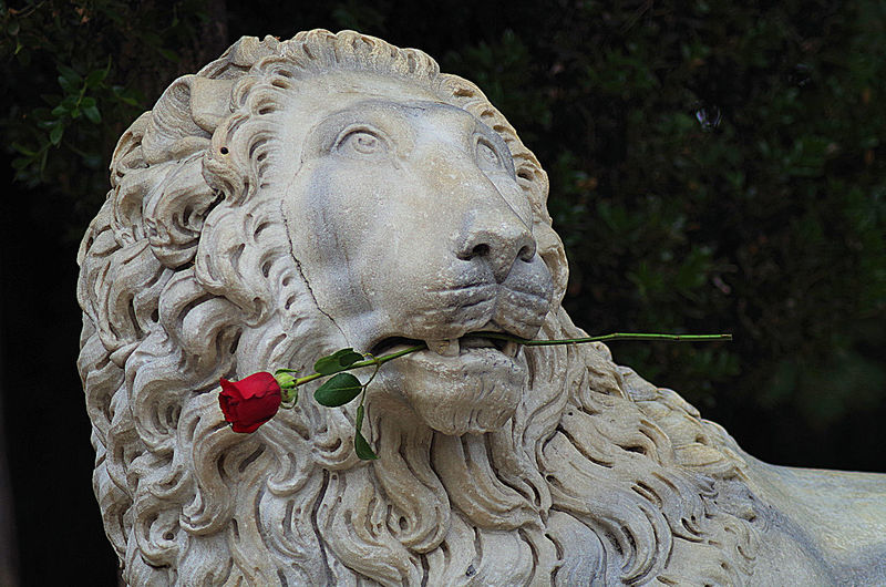 romantic lion statue Close-up Day Lion Lionking No People Outdoors Romantic Animals Rose In Mouth Rose🌹 Sculpture Statue