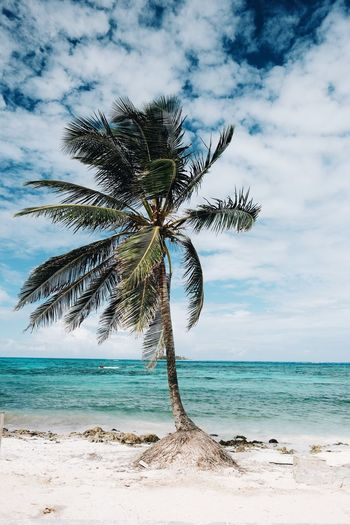 Coconut palm tree on beach against sky