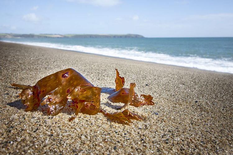 Seaweed on
