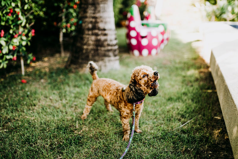 Animal Animal Themes Brown Canine Day Dog Domestic Domestic Animals Field Focus On Foreground Grass Land Mammal Nature No People One Animal Pets Plant Selective Focus Vertebrate