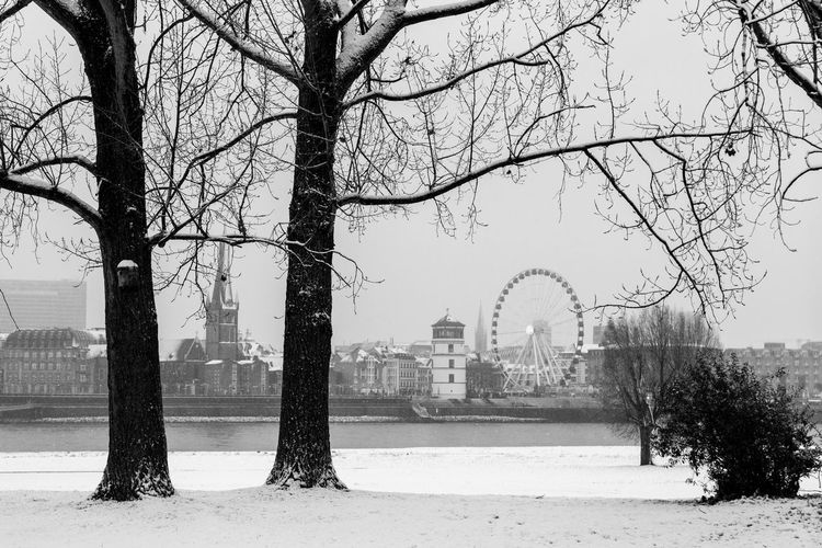 Düsseldorf, Germany Rhein Rheinufer Rheinwiesen Schnee Winter Bare Tree City Cold Temperature Day Nature No People Outdoors Snow Travel Destinations Tree Weather Winter