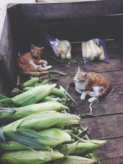Kitties and corn ❤️ First Eyeem Photo