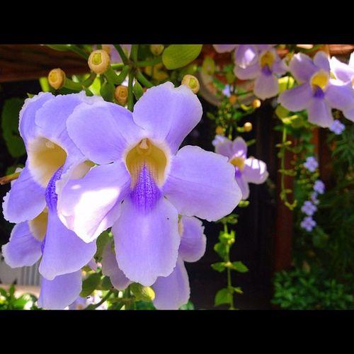 Flower Sunshine Working Thailand Instargram Picofday Perfect Nature Tree ASIA