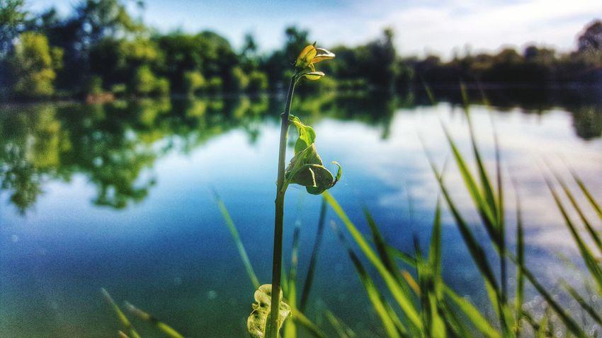 Lake Wonderfulworld Littlethingsinlife Wonderfulnature Beautiful Nature Flower Growing Sun Wonderful Day