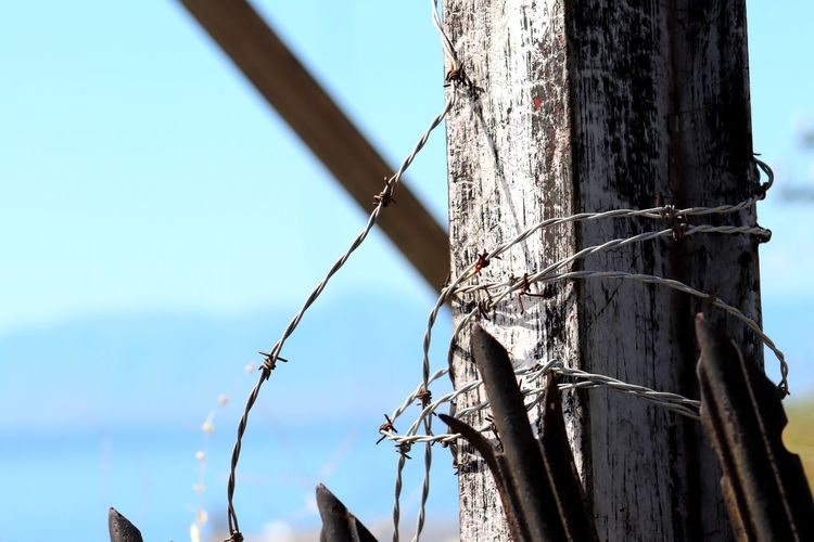 Barb Wire Close-up Complexity Day Fence Focus On Foreground Nature No People Outdoors Rusted Metal  Sky Steel Structure  Tower Tree Tree Trunk