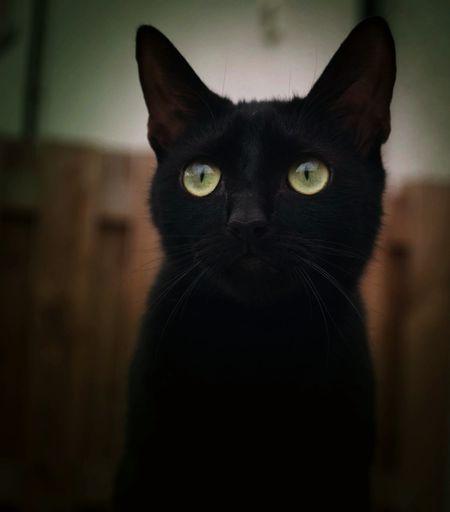 Jinxy Cat, Cat