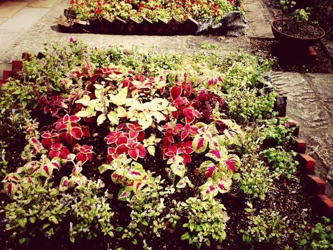 グラバーさんの庭。 Photo