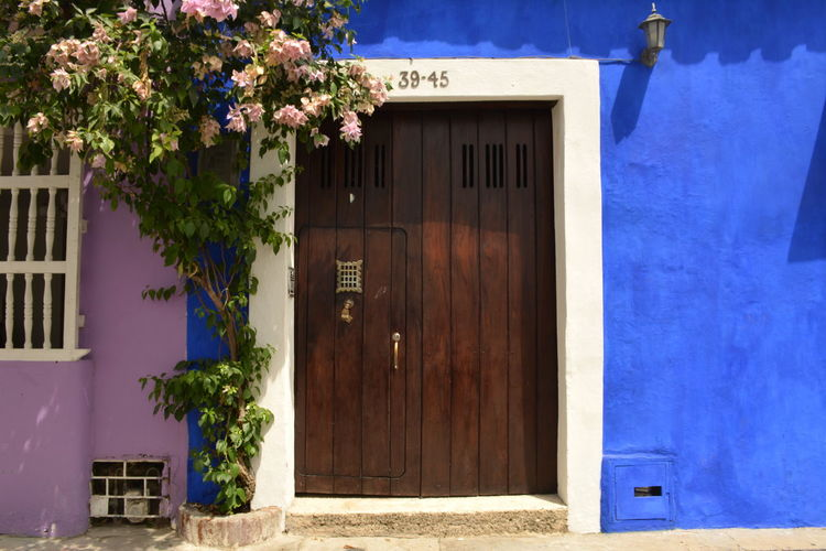 Vivid Colours  Ultramarine Lilac Flower Doorframe Door Wood Typical Charming Town Latin America Travel Travel Destinations Cartagena Travel Photography Architecture Colombia Entrance Window Blue House Residential District Day No People Flowering Plant Sunlight Outdoors
