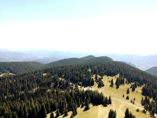 Rhodopes Rhodope Mountains Bulgaria❤️ Bulgarian Nature Beauty In Nature View From Above View Green Nature Photography Beauty Is Everywhere  Tree Mountain Rural Scene Sky Landscape Mountain Range Pine Woodland Evergreen Tree Eastern Europe Pine Tree