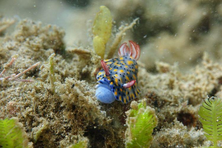Close-up of sea slug swimming in sea