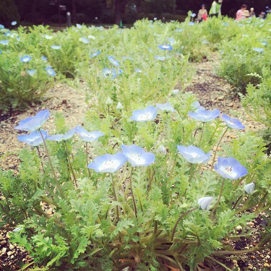 Blue Flowers Tadaa Community Spring