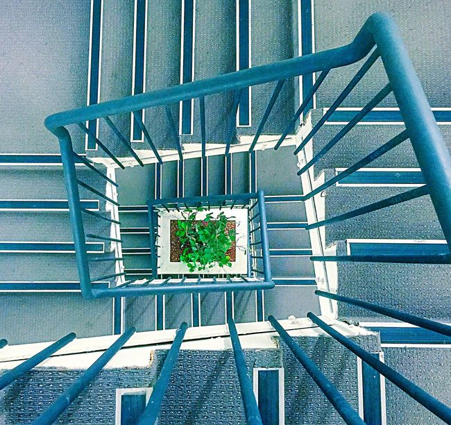 Spiral Staircase Perspective Staircase From Above Overhead View Elevated View Staircase Perspective Diminishing Perspective Perspective Spiral Design Spiral Spiral Stairs Focal Point Green Color Green Leaves Plants Spiral Staircase Stairs Graphic Lines Circular Stairway Staircase