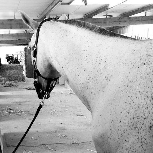 horse Horse Cheval