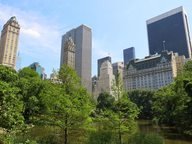Architecture Building CentralPark Forest Green Green Color New York New York City Nuture Park