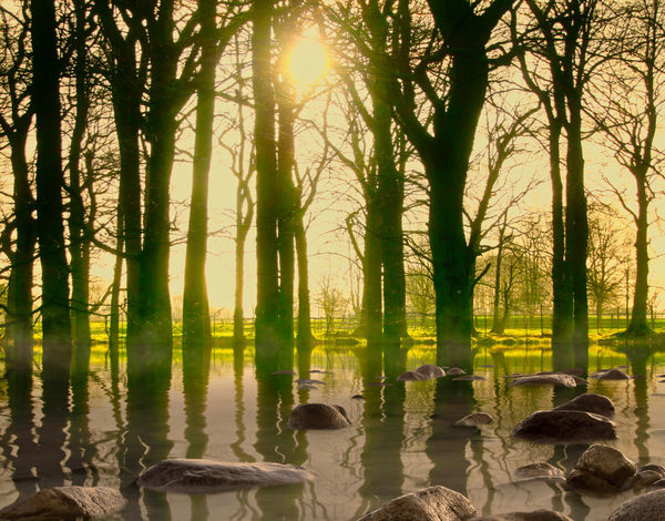 Morning mist Tree Water Plant Nature Reflection Beauty In Nature Lake Sunlight Tree Trunk Trunk Tranquility Forest Sun No People Scenics - Nature Land Tranquil Scene Sky Day Outdoors Lens Flare Bright