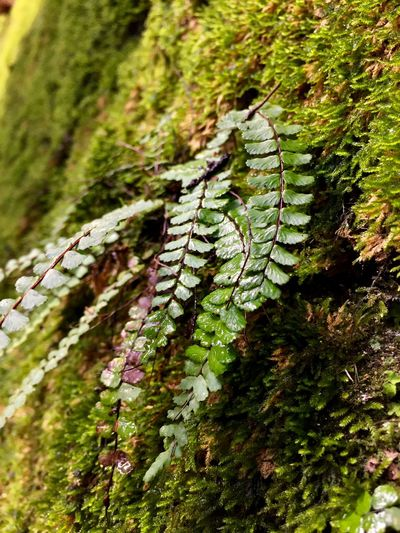 Plant Green Color Nature Growth Close-up No People Moss Beauty In Nature