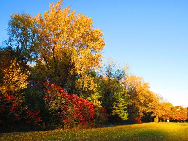 Fall Foliage Orange Leaves Autumn Splendour Autumn🍁🍁🍁 TreePorn Sunshine Fall Beauty Autumn Sunset #sun #clouds #skylovers #sky #nature #beautifulinnature #naturalbeauty #photography #landscape Sun Power No Filter, No Edit, Just Photography
