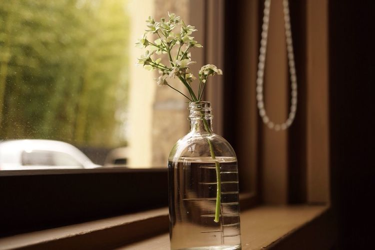 Close-up of flowers in bottle on window sill at home