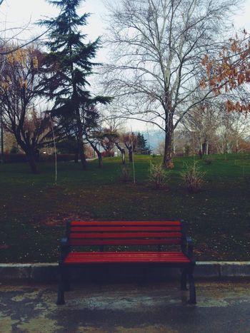 Waiting Alone Park Green Tehran