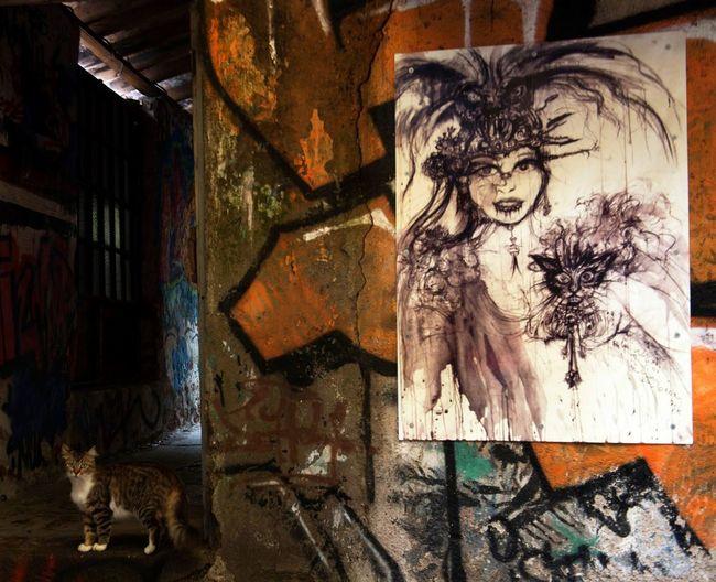 Cat, Art,