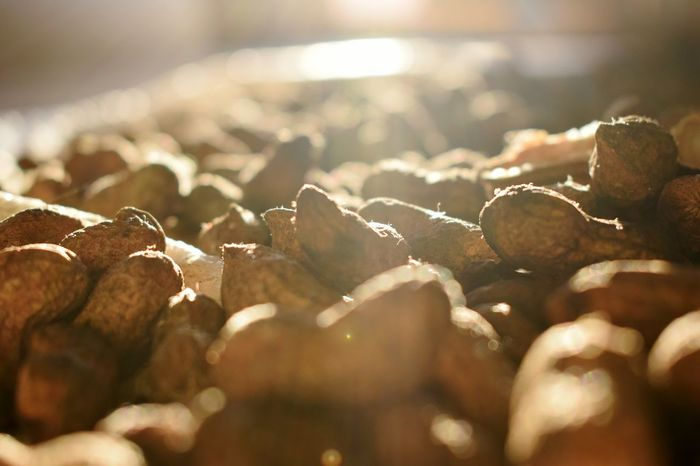 Selective Focus No People Indoors  Food Day Close-up Nature Freshness Groundnuts Groundnut Sunset Sunlight Sunlight ☀ Sun