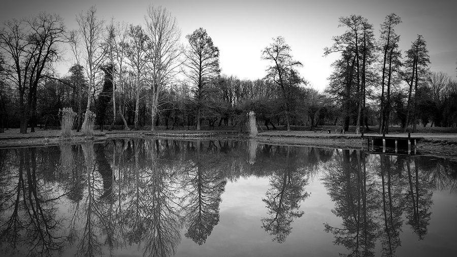 Lake's mirror