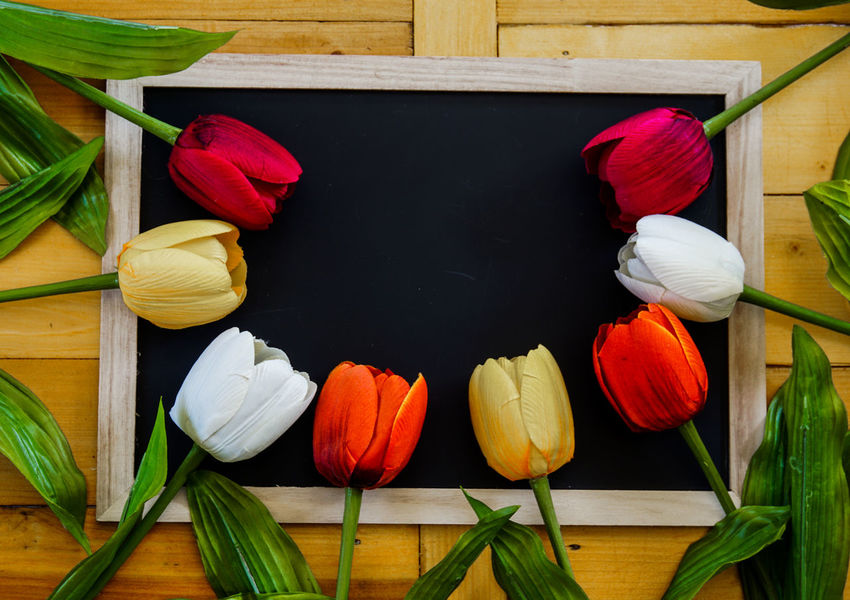 Beauty In Nature Close-up Day Flower Flower Head Fragility Freshness Growth Indoors  Leaf Multi Colored Nature No People Petal Red Tulip Wood - Material