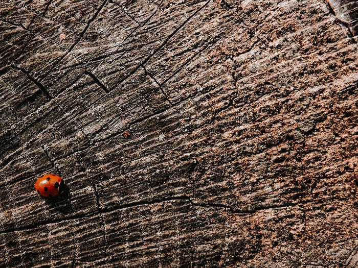 Close-up of ladybug on tree trunk