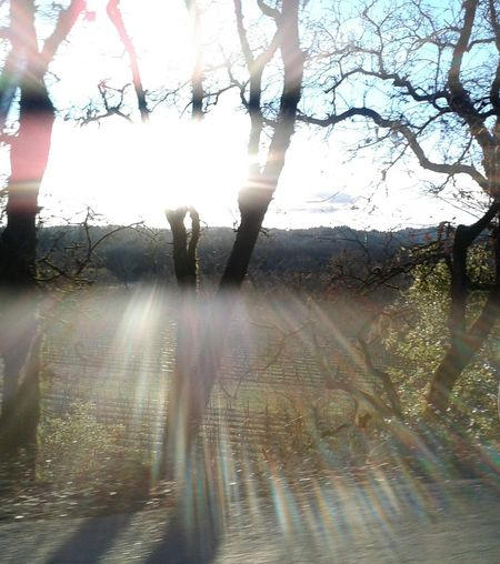 Sun Check This Out Enjoying Life Travel Scenic Nature No People Sun_collection Sunlight Sun Rays Perfect View Once In A Lifetime Rightplacerighttime No Filter Drive&shot Car Driving Backroads Vineyard Trees Sun Through The Trees