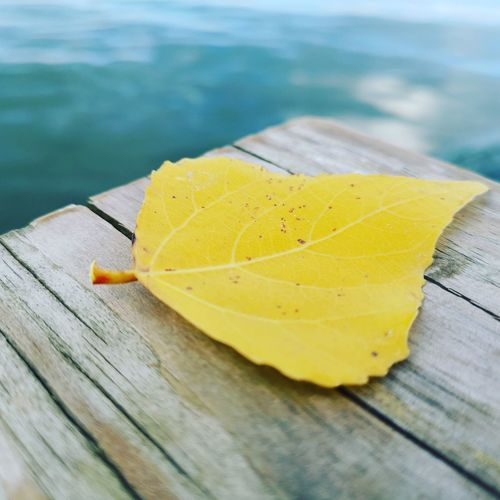 Autumn is coming Leaf 🍂 Autumn🍁🍁🍁 Autumn Leaves Colours Waterfront Autumn Collection Nature Nature Photography Naturelovers Water Yellow Wood - Material Close-up