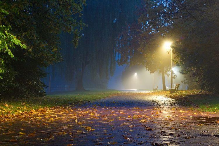 Wet Street And Illuminated Street Light In Foggy Weather