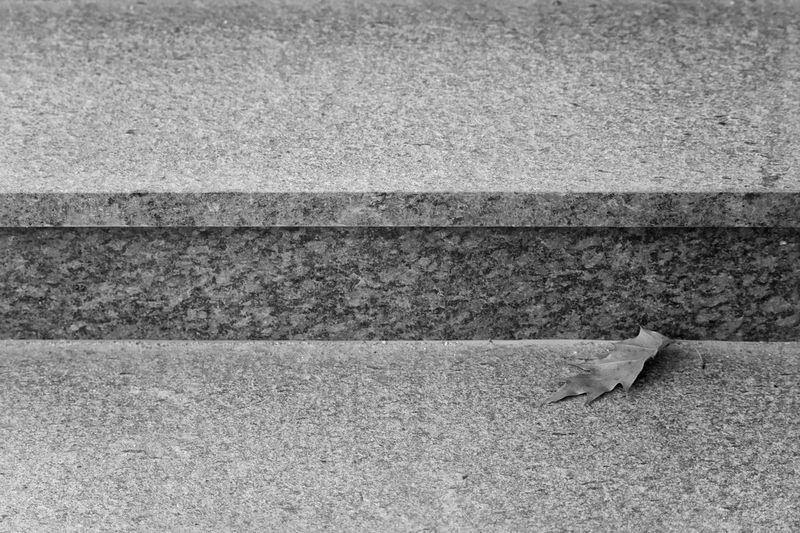 Leaf on stairs